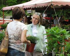 Teatown Plant Sale
